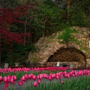 Tulips in Grotto 2